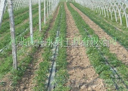 水肥一体化工程 荆门沙洋县辣椒滴灌带 滴水带