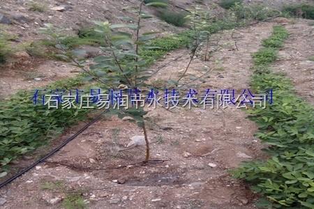 广西田东县果树滴灌-施肥罐-过滤器设备直销