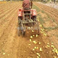 小型土豆收获机 手扶拖拉机马铃薯收获机无破皮伤果