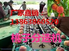 XGJ-T评价高的油桃分选机