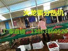 XGJ-SZZ供应钦州火龙果广西火龙果分选设备,火龙果分选设备制造厂家