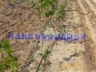 多种滴灌厂家 陕西滴灌管生产安装集一体