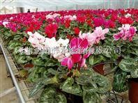 广东滴箭厂家销售 温室滴灌产品