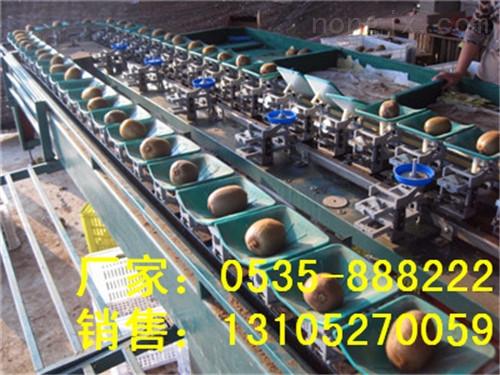 猕猴桃分级机作用-供应大猕猴桃选果设备