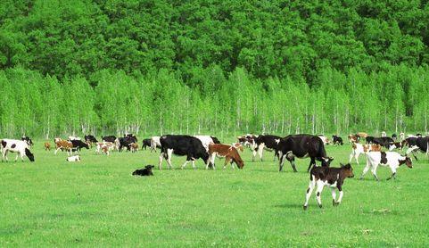 中国畜牧业协会:迎接畜禽绿色养殖方式的全面到来
