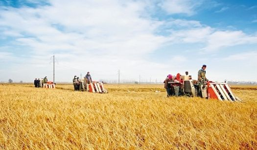 共享农业需要社会支持