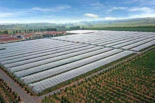 专家指出我国设施农业产业发展水平还很落后