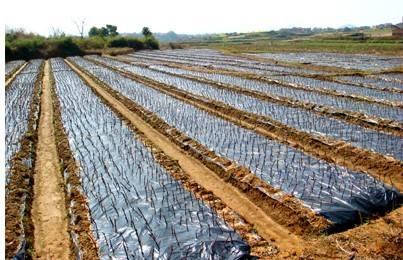 膜下滴灌节水又增产  已走向17个国家