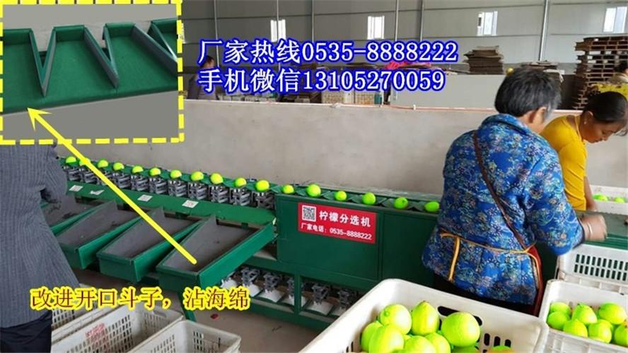 台湾青枣分选机    全自动台湾青枣分选机     分选青枣的大小的青枣分选机