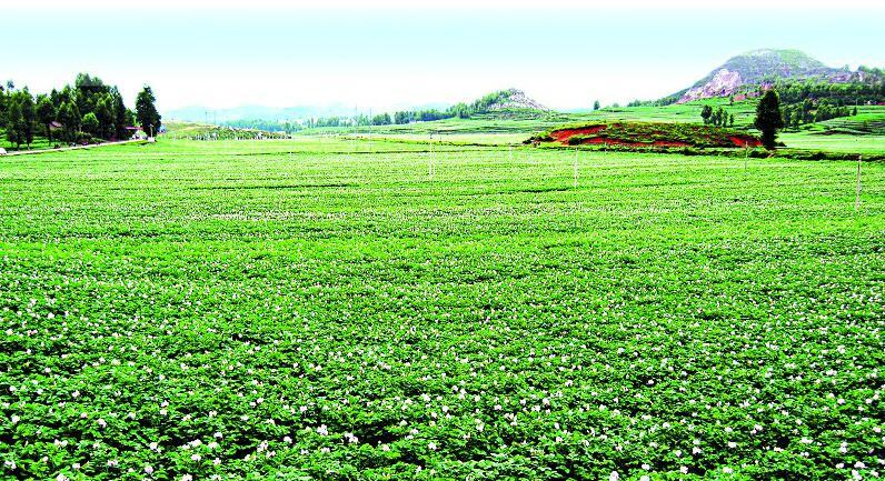 2007年以来,国家在东北三省和内蒙古自治区实行玉米临时收储政策,这一政策对保护农民利益和种粮积极性、保持市场稳定、保障国家粮食安全发挥了重要作用。然而,在新的市场环境下,国家收储行为客观上也造成粮食价格形成机制及市场价格信号被扭曲,对加工行业造成了较大的冲击。为了解决这一问题,中国粮食局决定取消玉米临时收储政策。改革玉米临储制度、建立新的收购和补贴机制,既是市场倒逼的必然结果,也是推进农业供给侧改革的必然要求。玉米临时收储政策调整为'市场化收购'加'补贴&rsqu